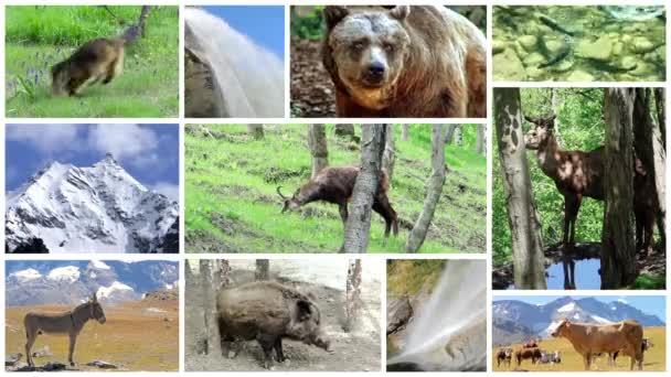 Montage der alpinen Fauna