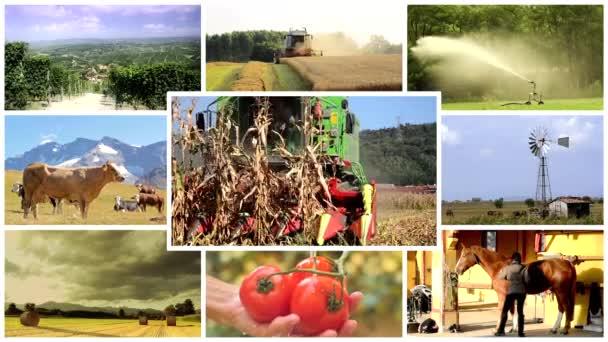 zemědělství fotomontáž, lidé a zvířata v zemědělské půdy