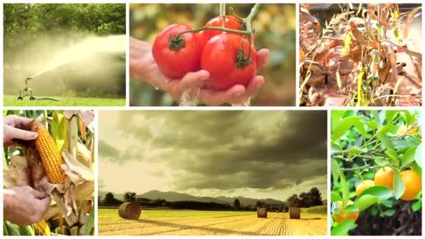 zemědělství fotomontáž, lidé, zvířata a produkty