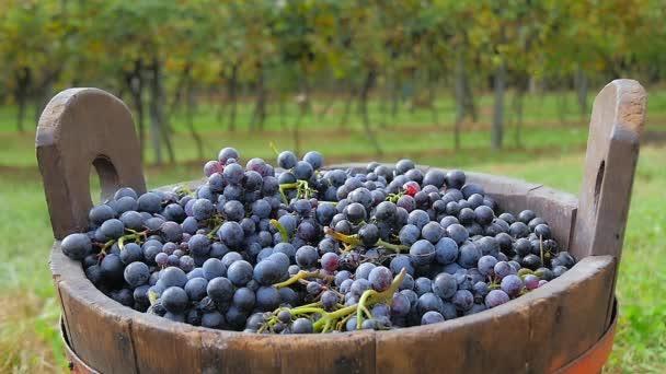 fekete szőlő- és szőlőültetvények háttérben kosár