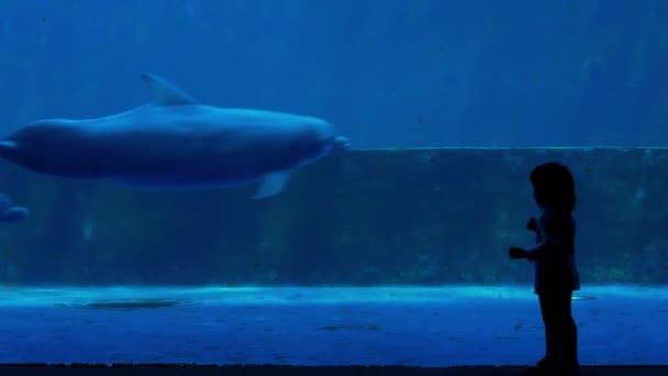 Sziluettjét kislány figyelte delfinek Aquarium