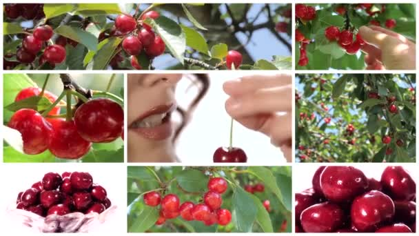 collage including nice woman eating cherry and cherry trees