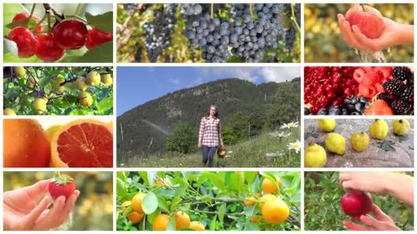 sestřih sklizeň ovoce