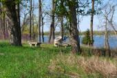 Místa k sezení v lesích za krásného jarního rána. Sue and Wes Dixon Waterfowl Refuge, Illinois, USA