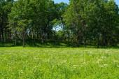 Krásná krajina podél turistických stezek v Nachusa Grasslands Ochrana přírody. Franklin Grove, Illinois, USA