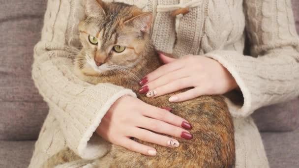 Mladá žena ve svetru hladí zázvorovou kočku a odpočívá doma. Ruce s krásnou manikúrou.