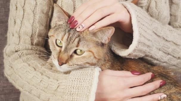 Nerozpoznatelná mladá žena hladí zázvorovou roztomilou kočku a relaxuje doma. Ruce s krásnou manikúrou.