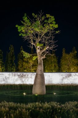 Garden with a baobab tree in the center at night.