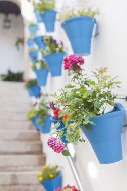 Patios flowers