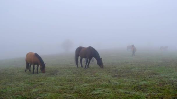 Koně na zamlžené louce v horském údolí