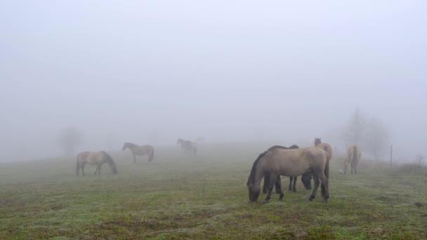 Lovak a ködös réten a hegyek völgyében