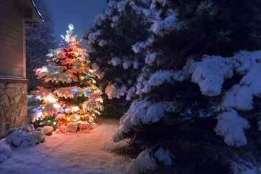 A heavy snow falls quietly on this Christmas Tree, accented by a soft glow and selective blur, illustrating the magic of this Christmas Eve night time scene.