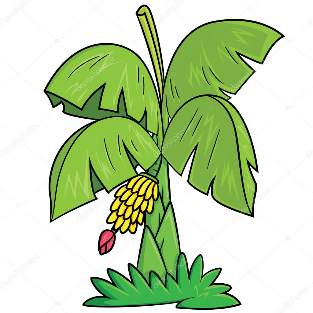 Iicture Banana Tree Cartoon Banana Tree Cartoon Stock Vector C Rubynurbaidi 87915220