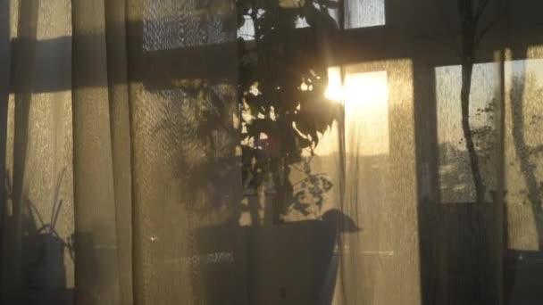 úžasný Zlatý východ slunce nad Palmou ve váze. Světlo tančí přes plášť záclony ze slunečného okna.