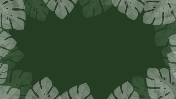 Tropical leaves isolated on green background. Premium 4k resolution motion Video. Shadow overlay effect. leaves shadows. natural shadows from isolated illustration.