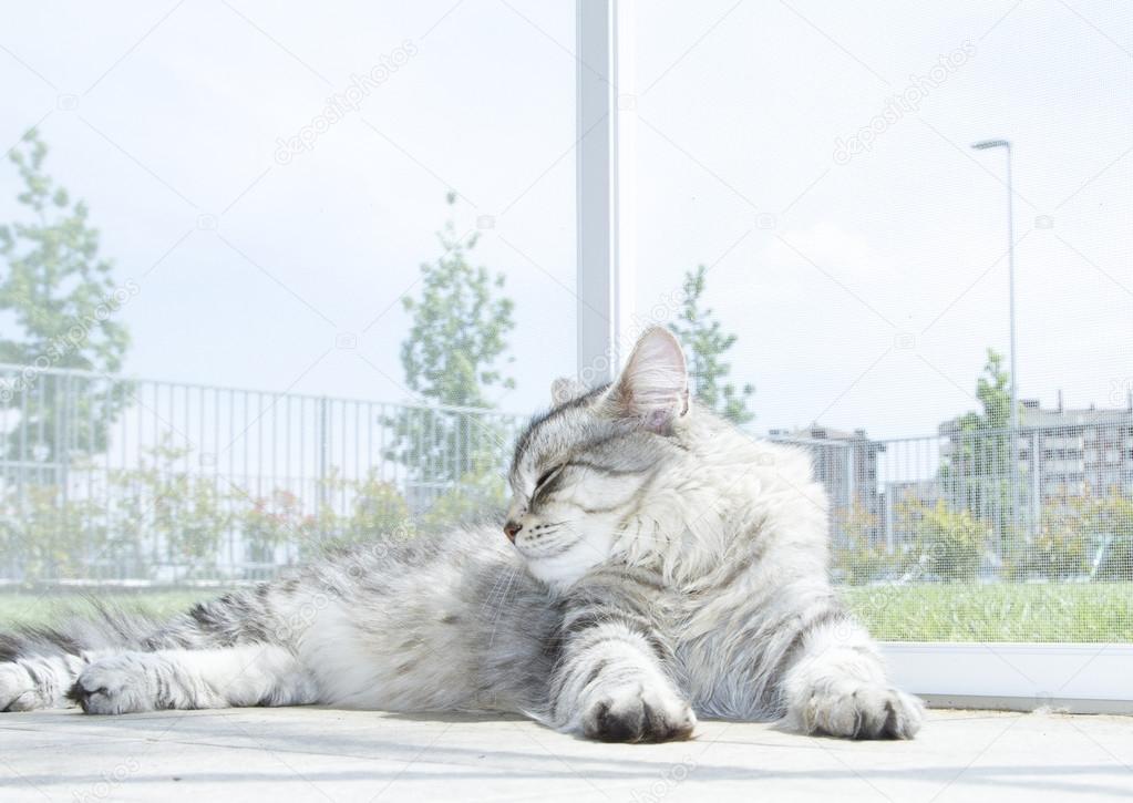 Krátké ženy kočička fotky