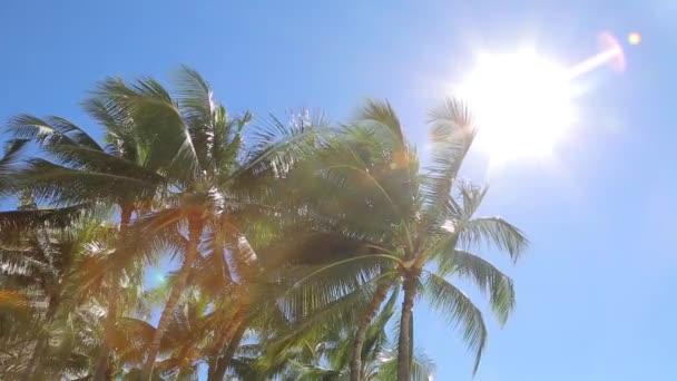 palmy v slunci