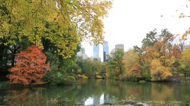 Jezero v central parku