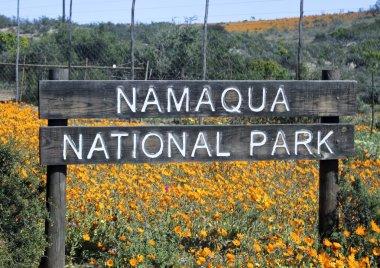 Dimorphotheca Sinuata. Each year the barren semi-desert Namaqual