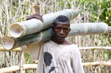 Hard working man carrying a tree trunk - MADAGASCAR