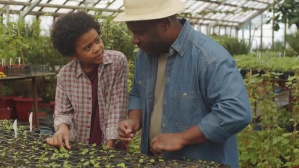 Afro-American farmer talking with cheerful little son while working together in greenhouse