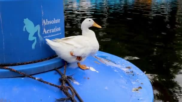 Mexico City, Mexico- June 2021: Duck on top of a buoy resting on Lake Chapultepec, a place where families often go for a walk on weekends.