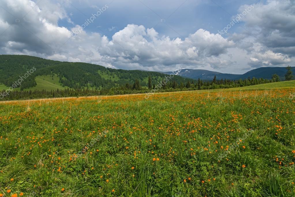 Montagne di prato di fiori d\'arancio — Foto Stock © Iri_sha #75934303