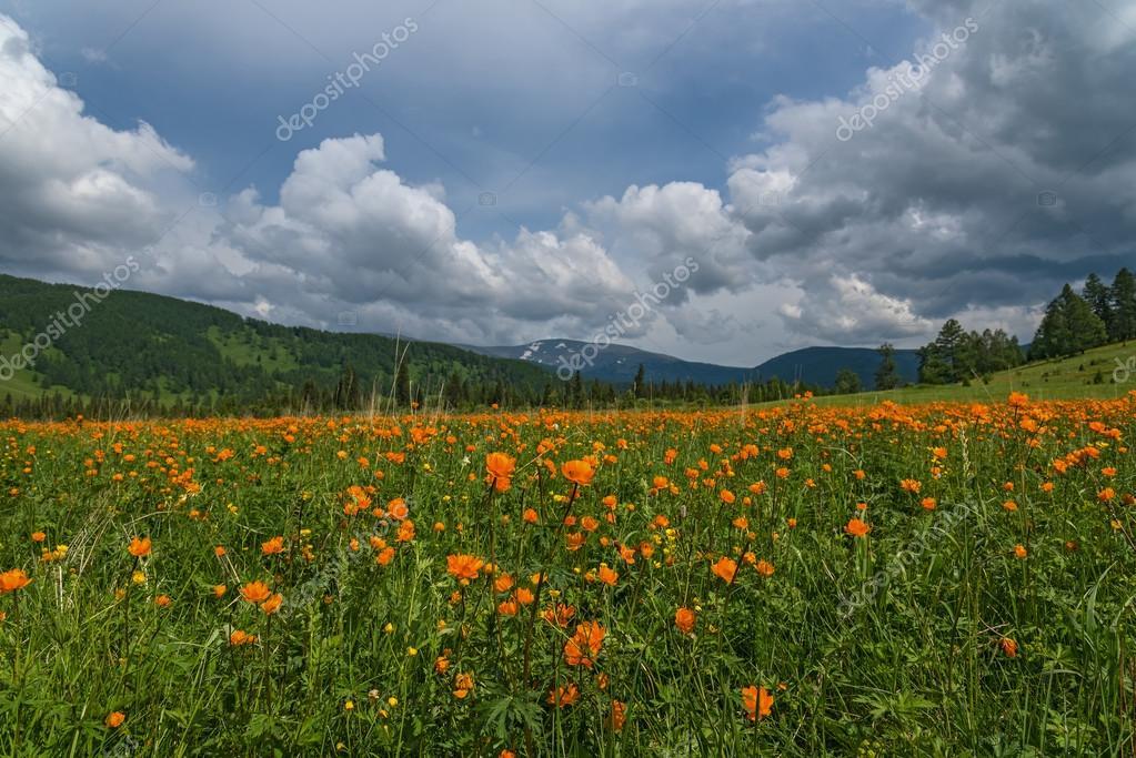 Montagne di prato di fiori d\'arancio — Foto Stock © Iri_sha #75934359