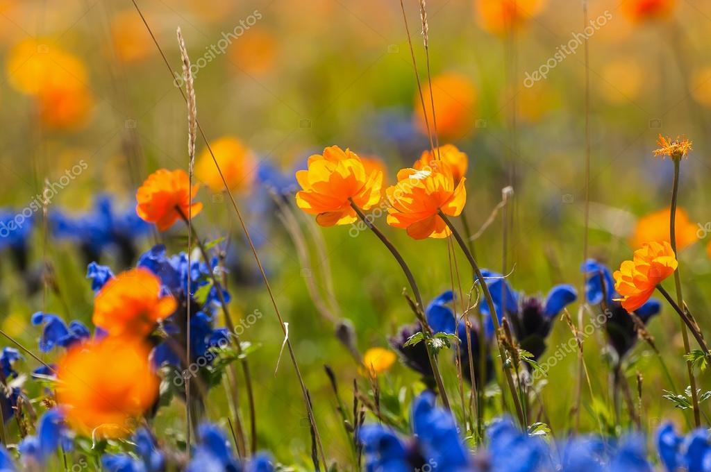 prato di fiori selvatici — Foto Stock © Iri_sha #78270806