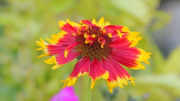 květiny z Indie