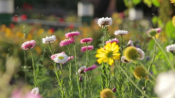Světlé květy z Indie