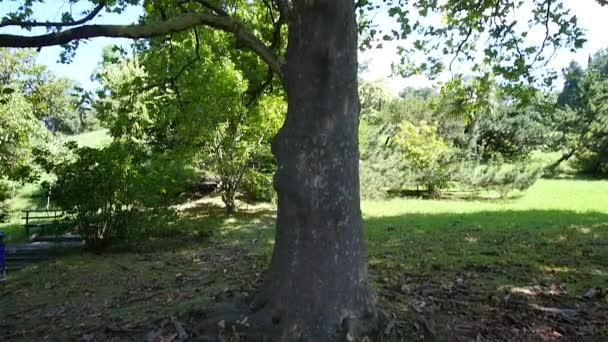 Velký platan strom v parku