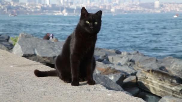 Kočky na břehu Bosporu. Istanbul