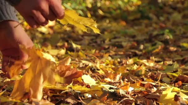 Mann sammelt gelbes Laub im Herbstpark