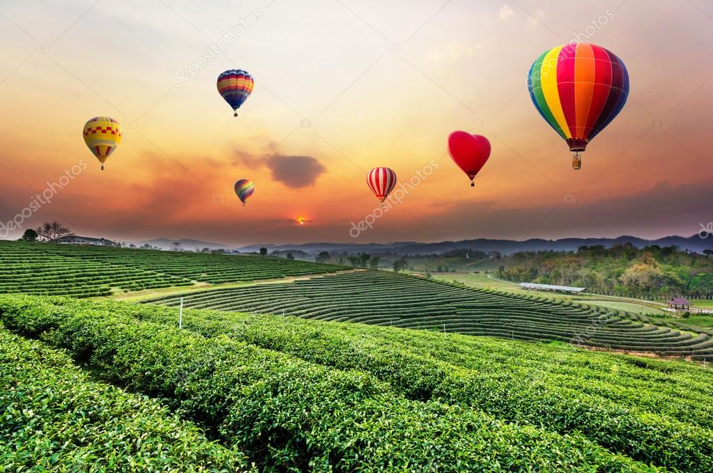 Colourful hot-air balloons flying over tea plantation landscape