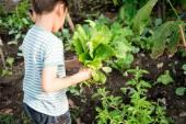 Fotografie Kleiner Junge arbeiten in der Farm im freien Einpflanzen