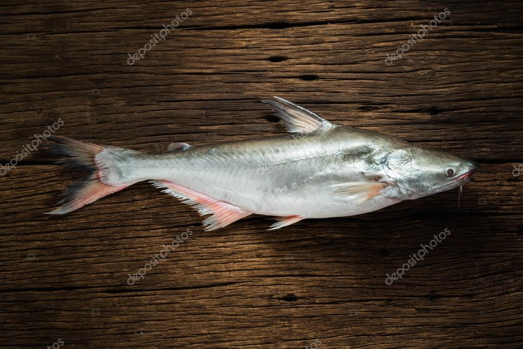 Pangasius Conchophilus Stock Photo C AEyZRiO 73137521