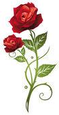 Vörös rózsa, szerelem