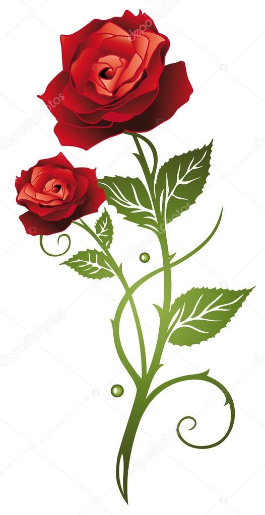 Red rose, love