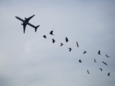 air plane and crow