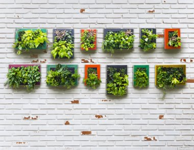 aged brickwall and vertical garden