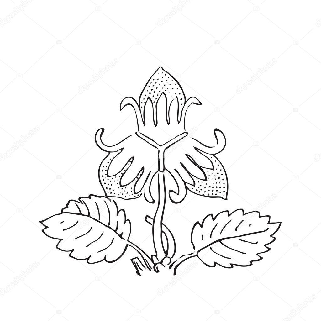 Illustrazione Di Vettore Di Cespugli Di Fragola Disegnata A Mano