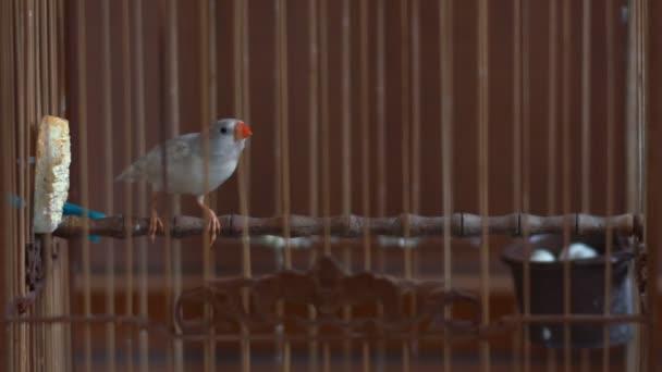 Finch ptáků v kleci
