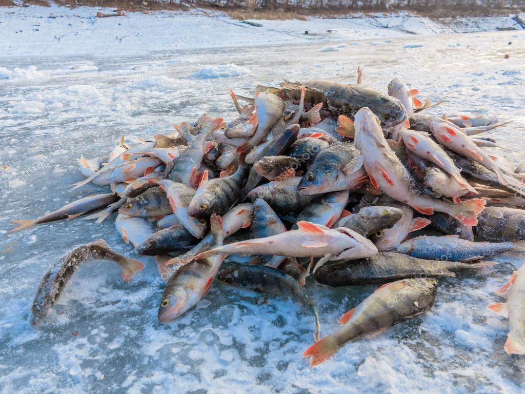 alot of fish com