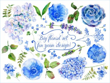 Set of different blue, cyan hydrangea, lavender, currant for des