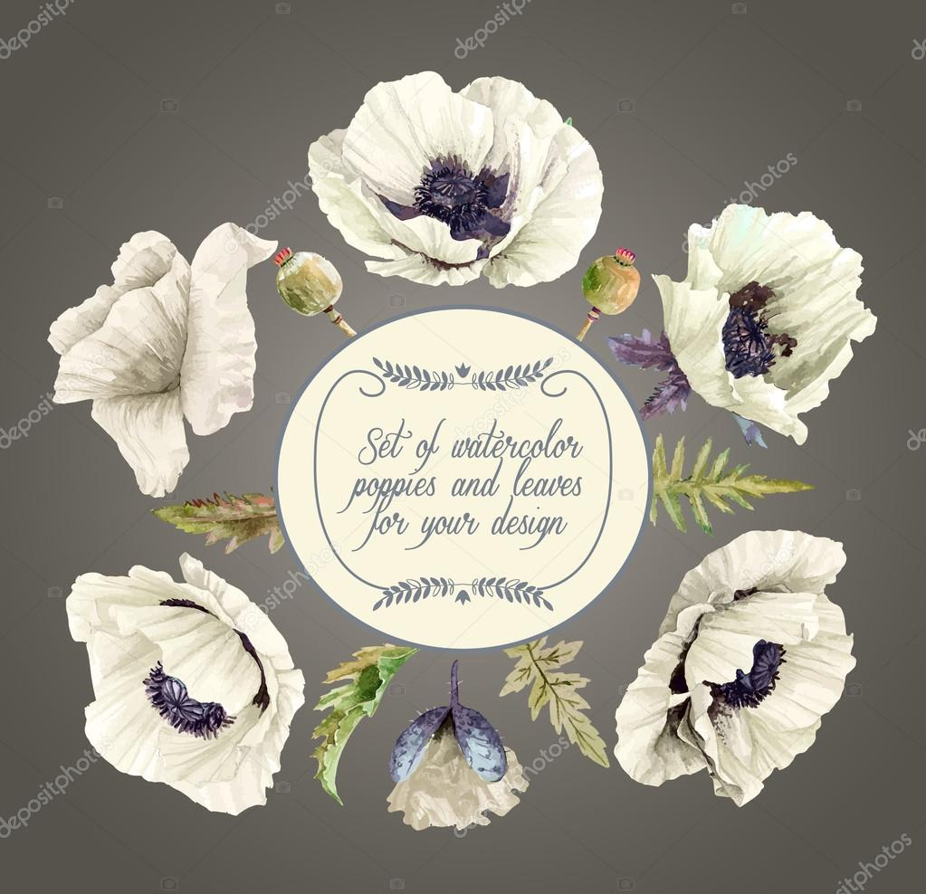 Vector set of white poppies, buds, leaves for design.