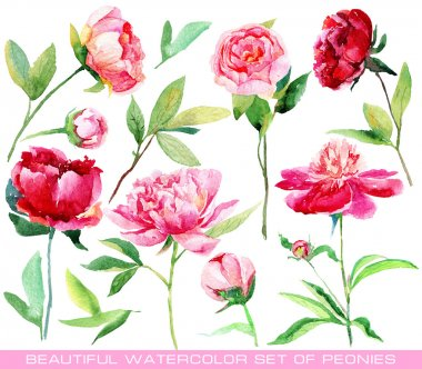 Set of different red, pink peonies, leaves for design.