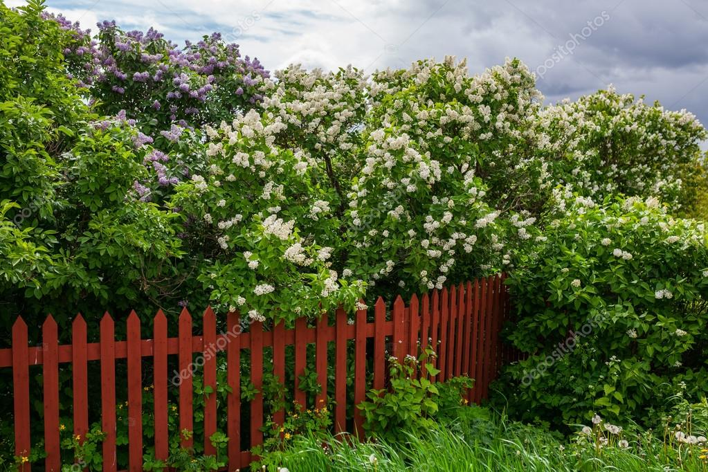 Garden fence with flowering trees