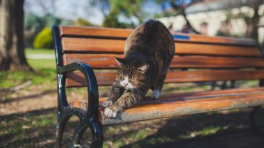 cat stretches on the bench