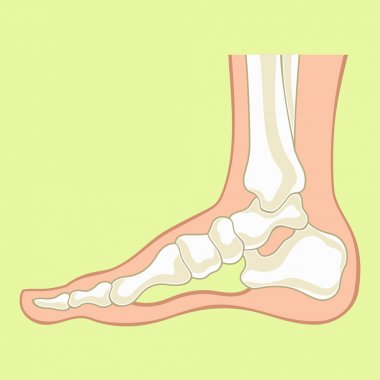 Foot x-ray. Vector flat illustration